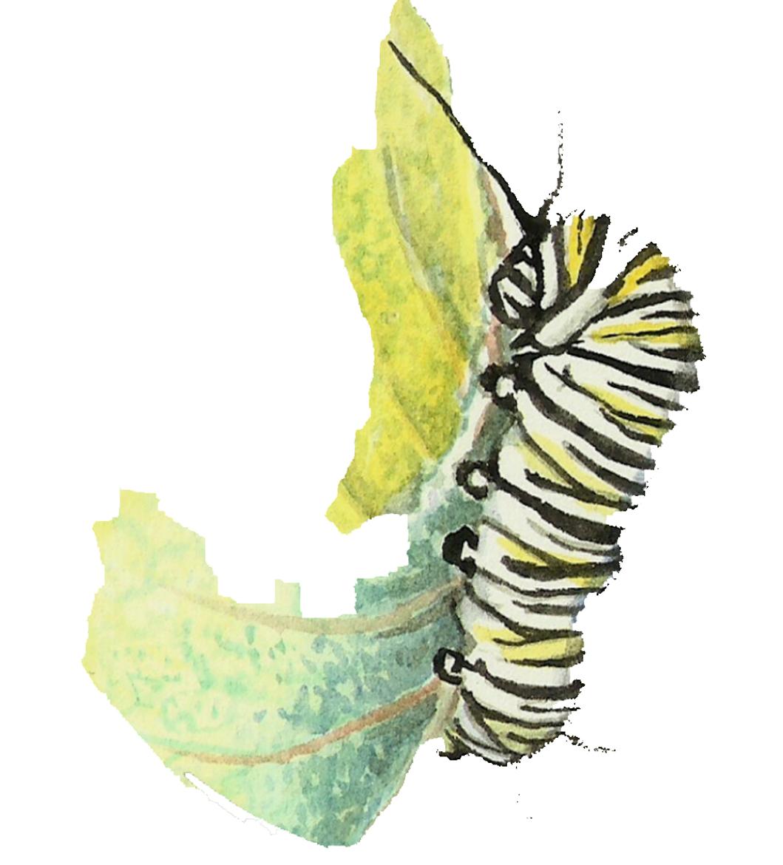 web-caterpillar