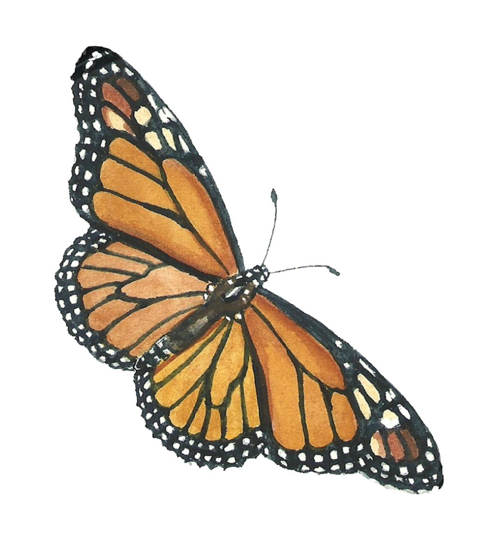 web-wings-spread